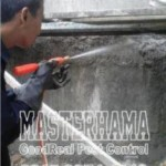 Jasa Pembasmi Rayap Jakarta Pusat