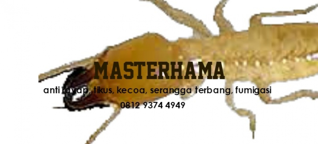 Jasa Pembasmi Rayap di Semarang