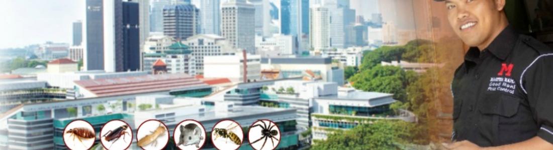 Jasa Anti Rayap 5 Besar di Jakarta